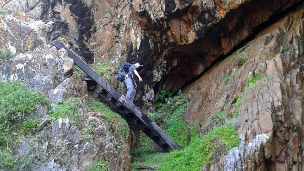 Ladders on the Harkerville trail